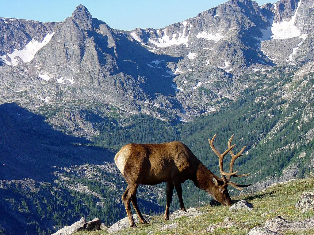 Rocky Mountain National Park State Symbols Usa
