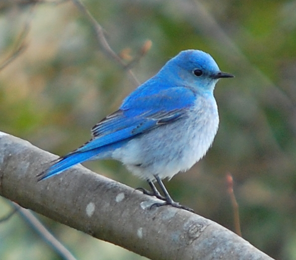 Delaware: McCabe Preserve Bluebird Trail | The Nature Conservancy