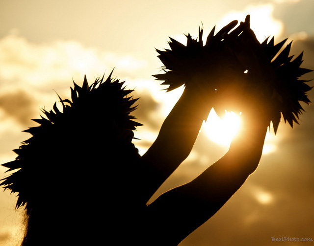 Hula dancer caught in the sun photo by andy beal on flickr