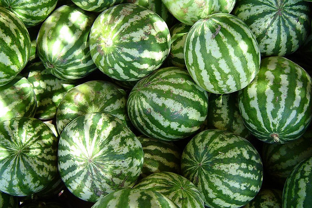 when to plant watermelon in oklahoma