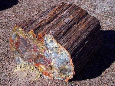 https://statesymbolsusa.org/sites/statesymbolsusa.org/files/styles/large/public/petrifiedwood380.jpg?itok=yhNSjbJ0