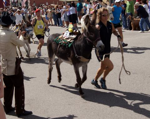 Colorado pack burro race