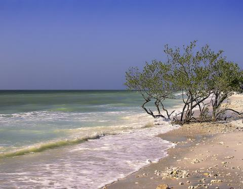 Florida beach - Honeymoon Island, Dunedin, Pinellas County.