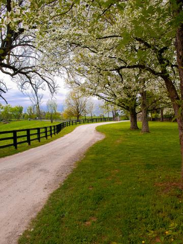 Kentucky bluegrass country