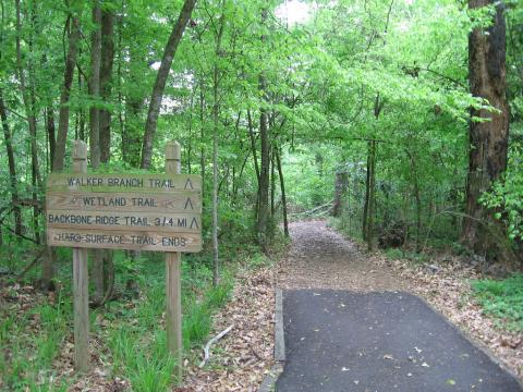 Trails: Louisiana State Arboretum / State Preservation Area