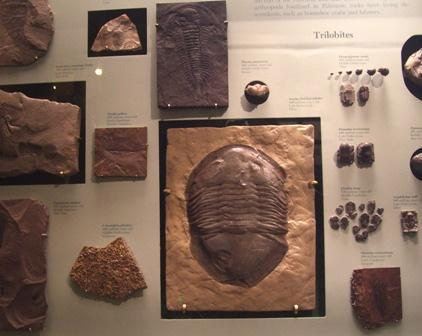 Ohio Trilobite at the Smithsonian