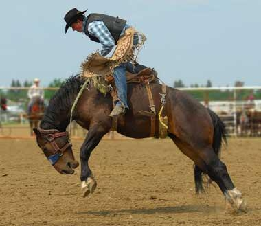 Rodeo cowboy on horse