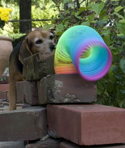Slinky toy fun!