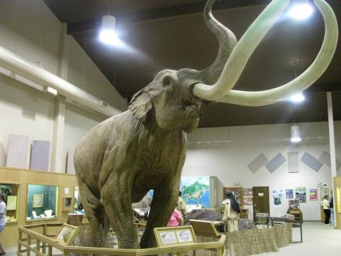 North American Columbian mammoth