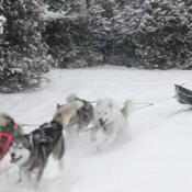 Musher dog mushing - Hike!
