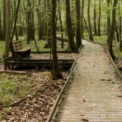 Boardwalk at Congaree National Park, South Carolina