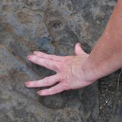 Dinosaur track in Massachusetts
