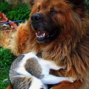 BFF dog and cat