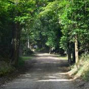 Dirt path in woods of Natchez, Mississippi