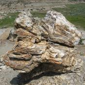 Petrified wood in the petrified forest; Teddy Roosevelt National Park, North Dakota