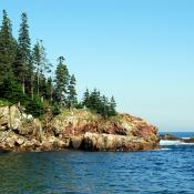Pine trees on the Maine coast at Acadia National Park, Bar Harbor, Maine