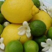 key limes and lemons