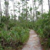 Pinelands Trail, Everglades National Park