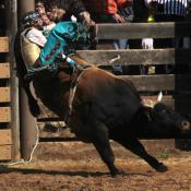 Bull rider at a rodeo in Deadwood, South Dakota