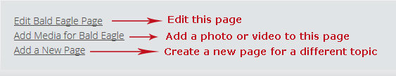 Edit an existing page, add an image, or create a new page!