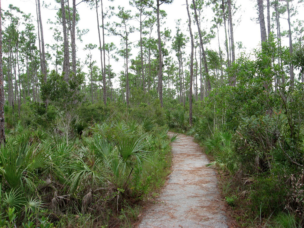 everglades national park If you have one day or its your first visit to the everglades, this guide will help you see wildlife and experience the essence of everglades national park we offer tips, too, for more in-depth everglades experiences.